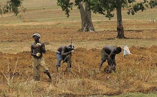 Nigerian Peoples