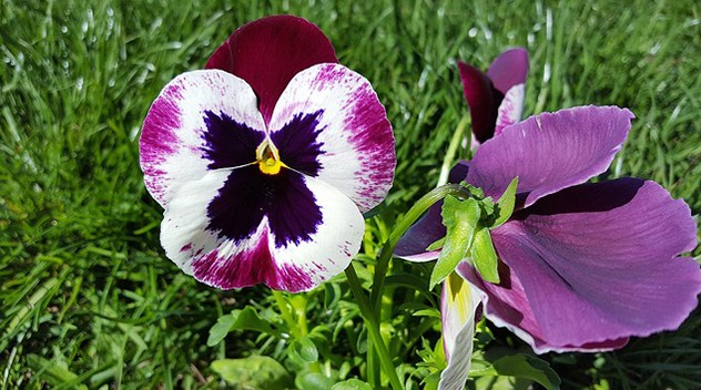 What Is a Biennial Plant