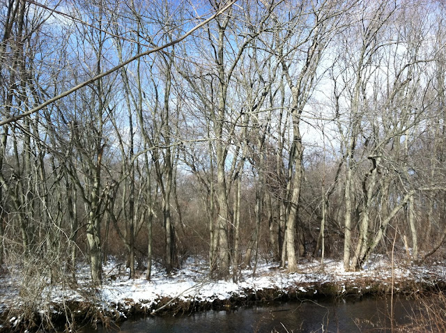 Snow-and-Trees-at-the-Massapequa-Nature-Preserve-Winter-2013