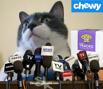 """CK's Dirty """"Litter"""" Secret #ChewyInfluencer"""