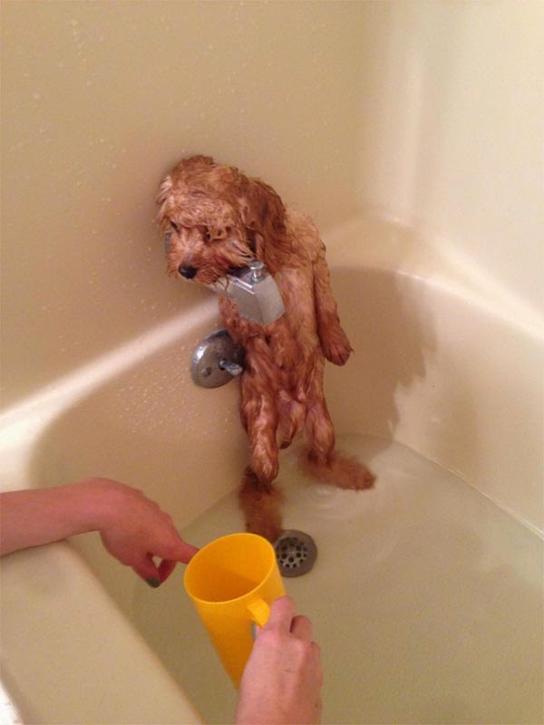Adorable Cats And Dogs Who Really Hate Bath Time 40 Pics