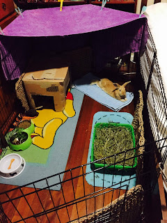 Indoor Rabbit Pen