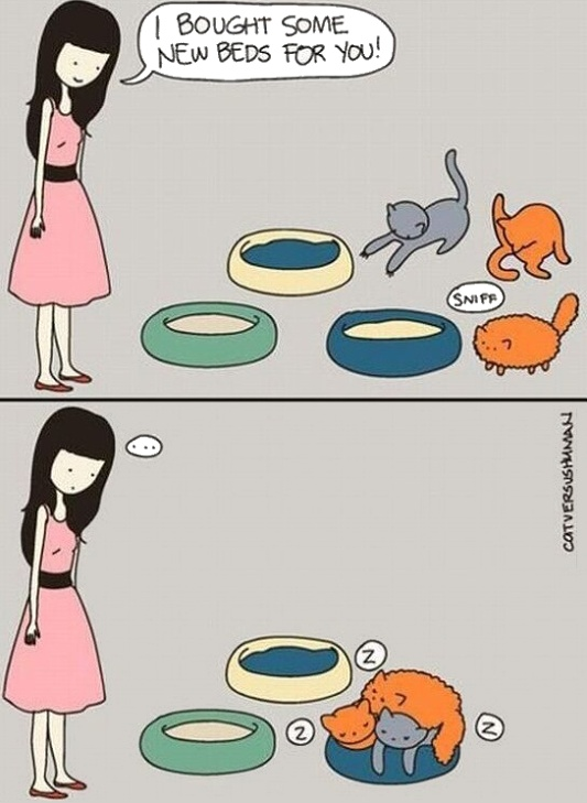 gatos cats humor grafico