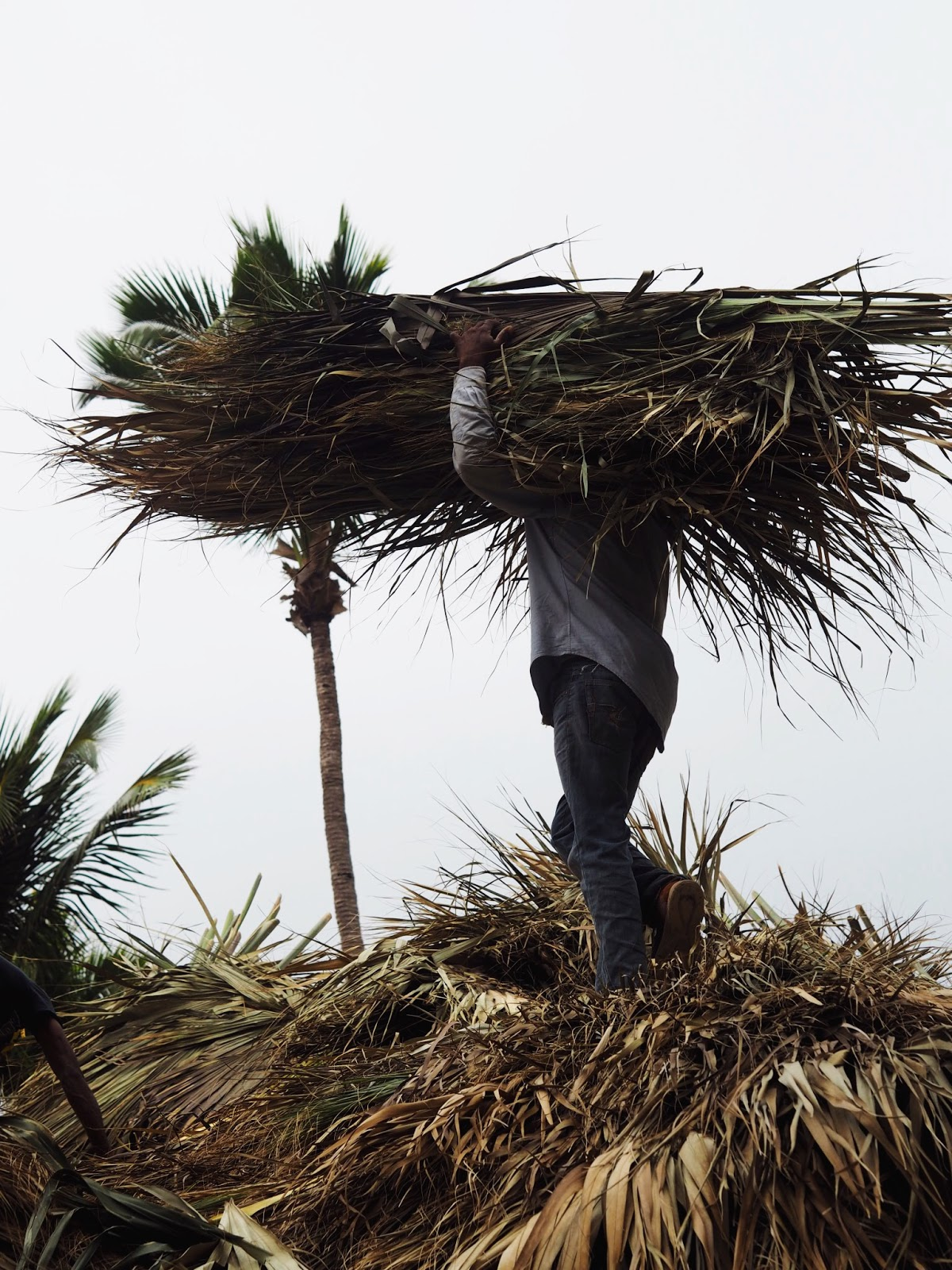 Local Roofer carrying palms for a palm roof