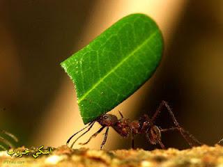فك النملة أقوى من فك التمساح