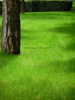 derniere pelouse à tondre http://larbredeviejbd.blogspot.fr