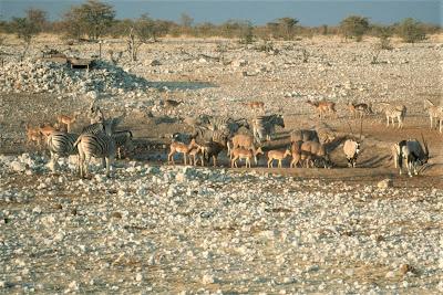 Namibia, Etosha National Park, Gemsbok, Impala, Zebra