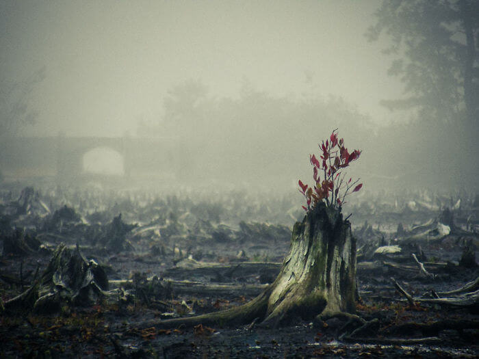 17 Pictures Of Trees That Prove The Miracle Of Life - Striving