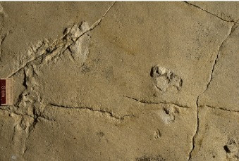 Human footprints recently discovered on the island of Crete are 5.7 million years old.