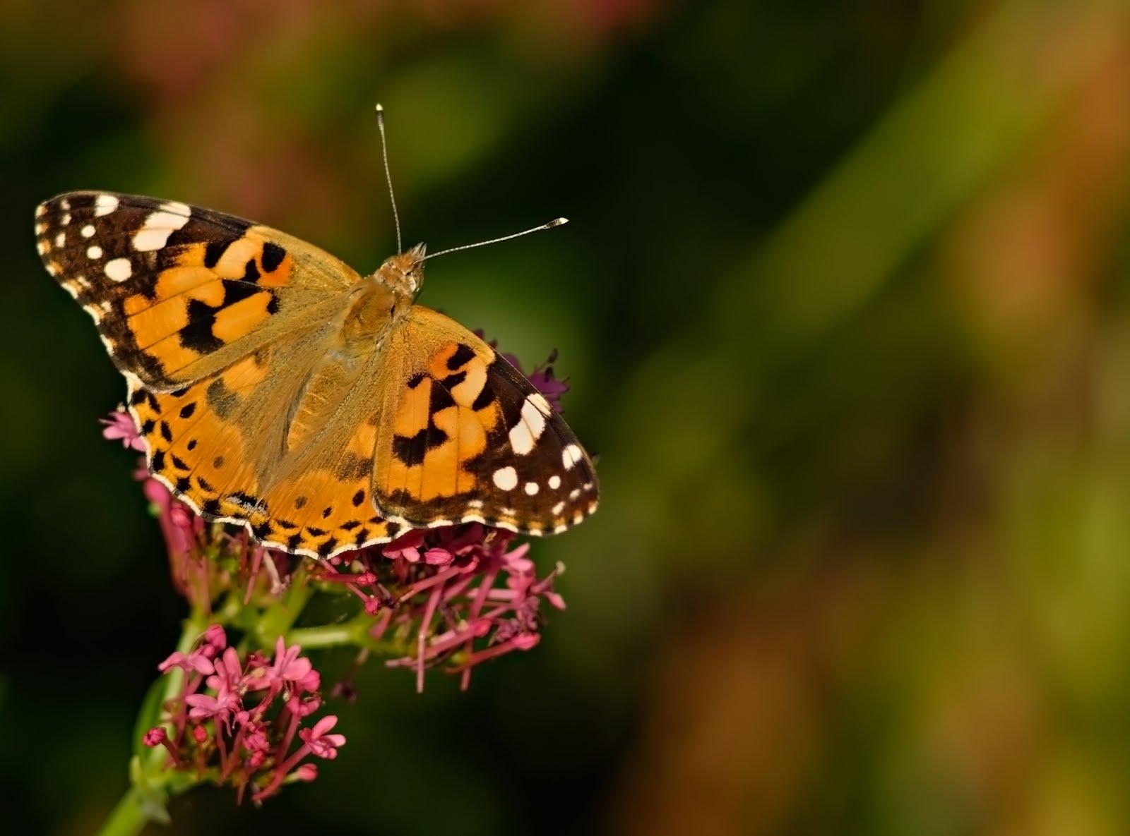 Flores Hermosas Flores Silvestres Fondos De Pantalla Gratis: Fotos De Flores Silvestres Gratis
