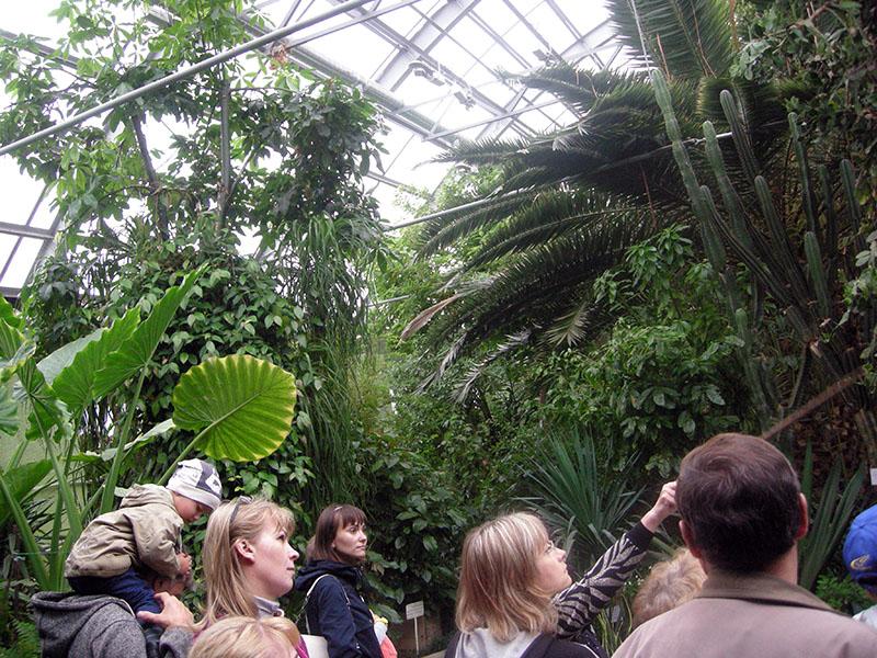 кировск ботаническая станция