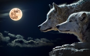 Wallpaper: Wolves and Full Moon