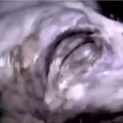 Video close up of an Alien.
