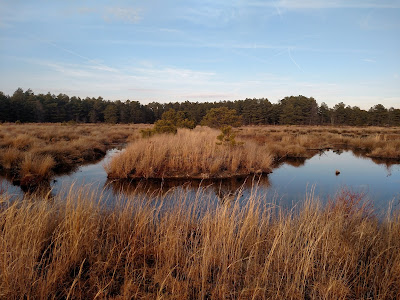 Breached dike at restored cranberry bogs, Franklin Parker Preserve, Pine Barrens, New Jersey