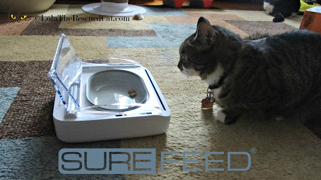 surefeed sealed pet bowl