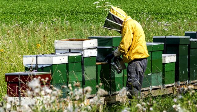Δείτε πόσο τους πληρώνουν για να γίνουν μελισσοκόμοι: Τα ποσά πραγματικά απίστευτα!