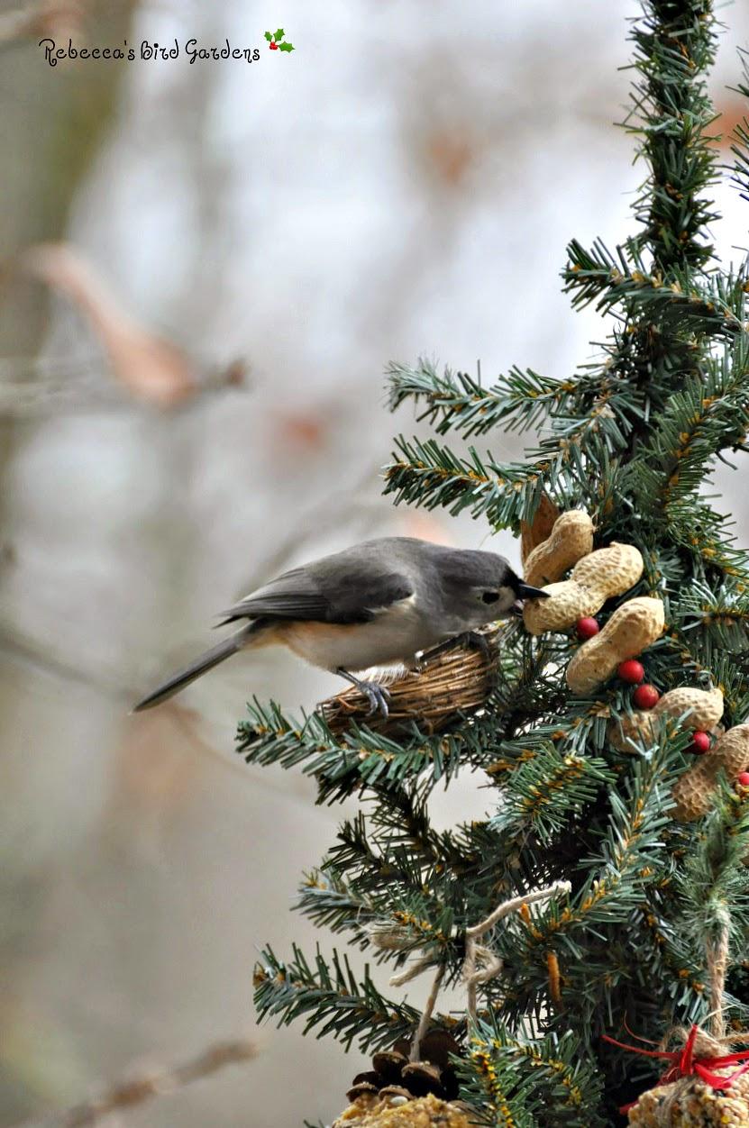 Rebecca's Bird Gardens Blog: A Christmas Tree for the Birds!