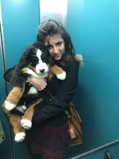 la_sciarpa_viola, claudia_magro, selfie, style, closet, shooting, models, fashion, travelblog, bovaro_bernese, toretto, dogs