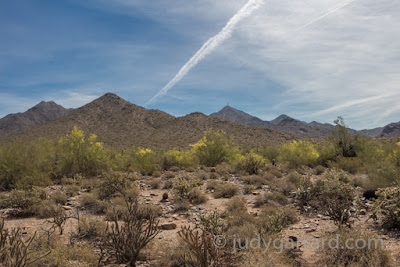 McDowell Mountain Range and yellow palo verde trees