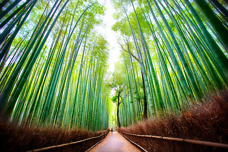 Travel Expectations Vs Reality (20+ Pics) - Exploring Arashiyama Bamboo Forest In Japan