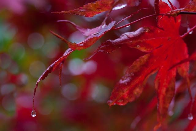 automne-arbre-feuilles-pluie-ce-que-je-n-aime-pas-en-automne