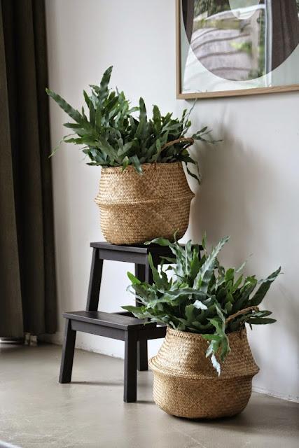 Decorar con cestas naturales y plantas-1