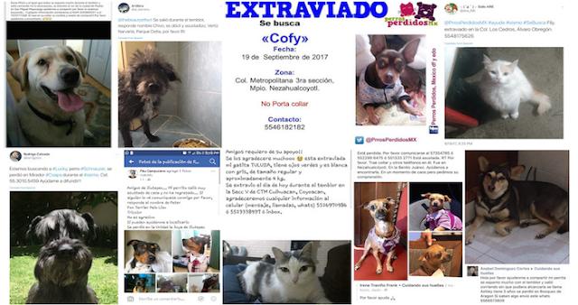 Más de 150 mascotas se encuentran extraviadas en la CdMx tras el terremoto, reportan