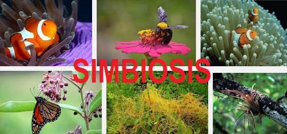 Kumpulan Soal IPA 6 SD – Simbiosis serta Pembahasannya