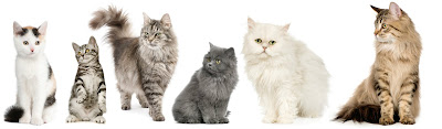 So far, the Million Cat Challenge has saved more than 700,000 lives.