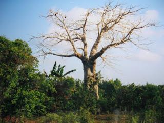 zanzibar foresta Jozani
