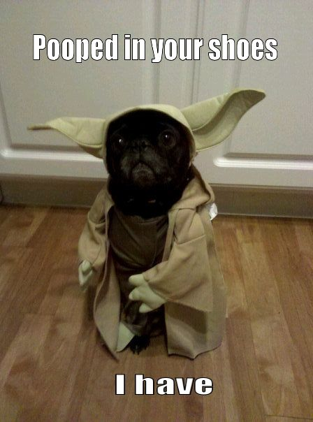 Funny pooped in your shoes I have Yoda dog meme joke picture