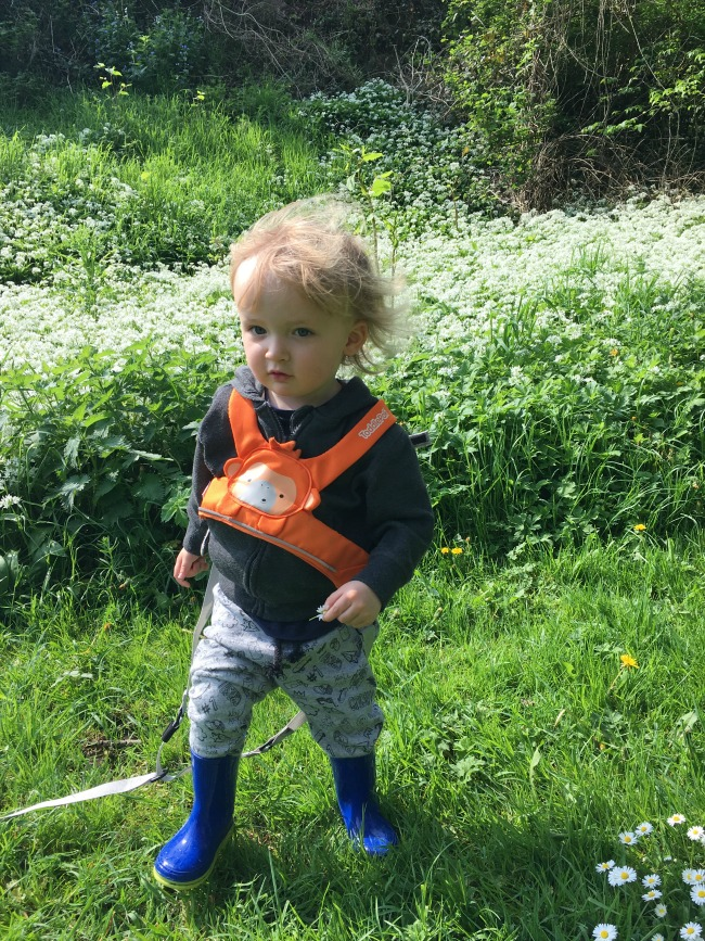 toddler in front of white flowering garlic
