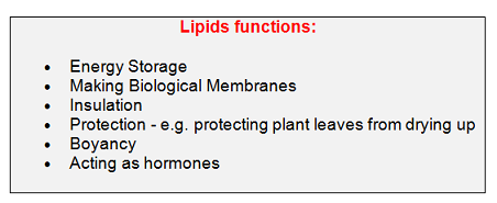 11 Lipids Triglycerides And Phospholipids Biology