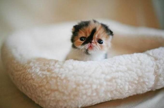 cute newborn kitten