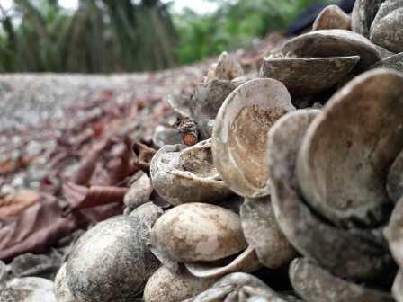Situs Bukit Kerang Aceh Tamiang