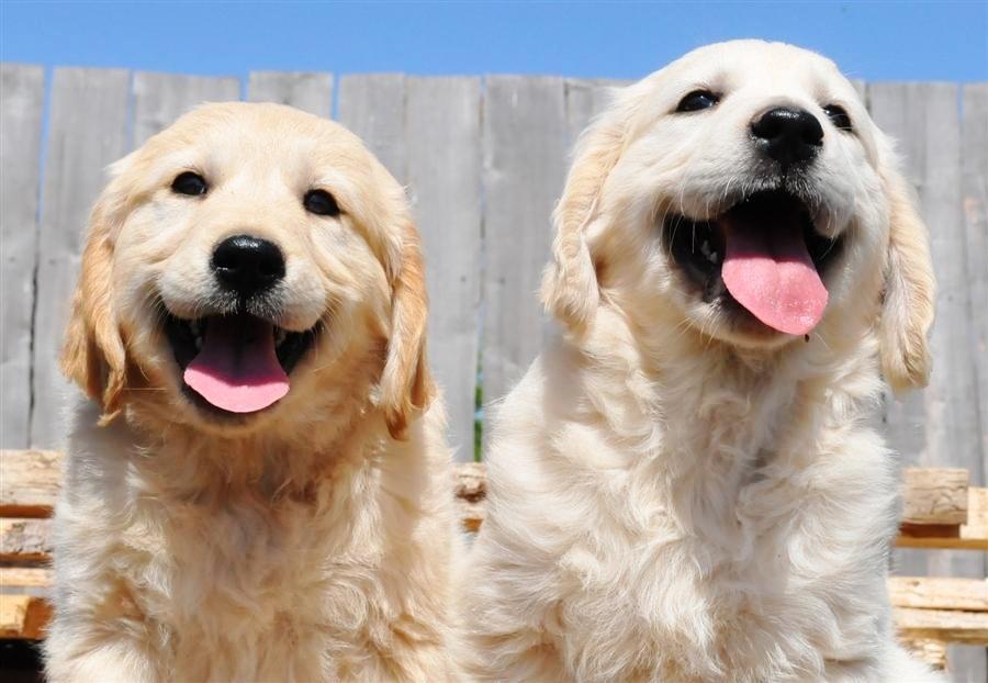 amazing jpg happy dogs. Black Bedroom Furniture Sets. Home Design Ideas