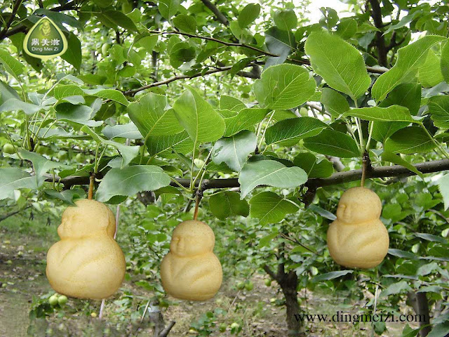 buah dengan bentuk seperti patung budha-4