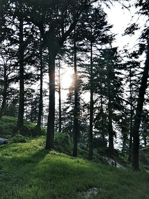 almora travel diaries , pine trees ,travel ,wanderlust