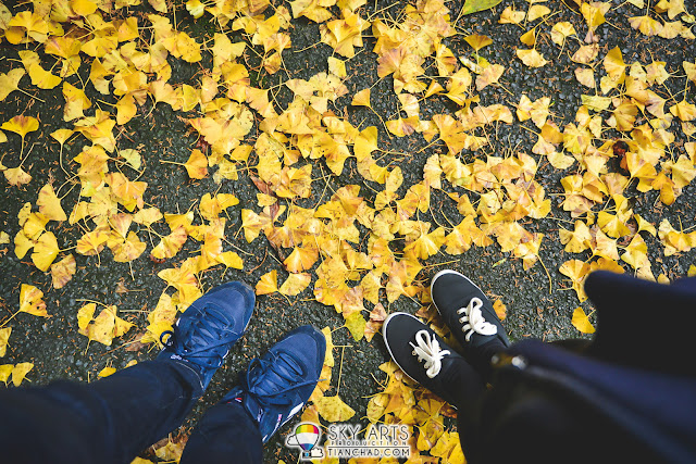 Yellow Ginkgo Leaves on the floor flatlay #autumnleaves