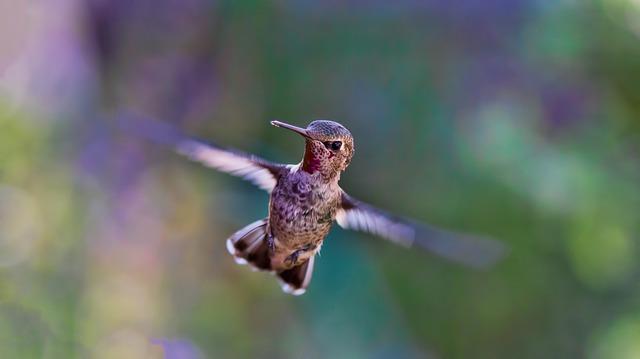 hummingbird-691483_640.jpg