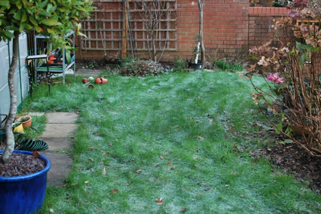 picture of a lawn with flower pots strew and grass with frost