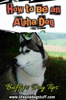 7 Tips on How To Be An Alpha Dog.