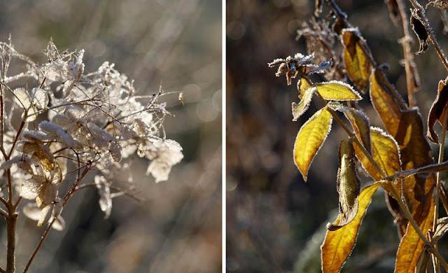 Smukke skærme og blade i haven om vinteren