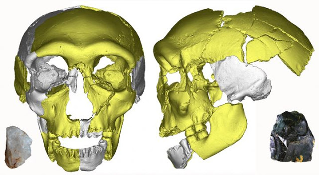 Middle Pleistocene human skull reveals variation and continuity in early Asian humans