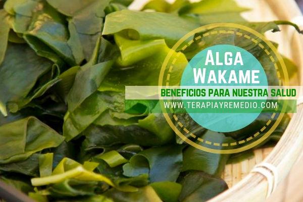 El alga wakame, Undaria pinnatifida, tiene beneficios medicinales y propiedades nutritivas sorprendentes