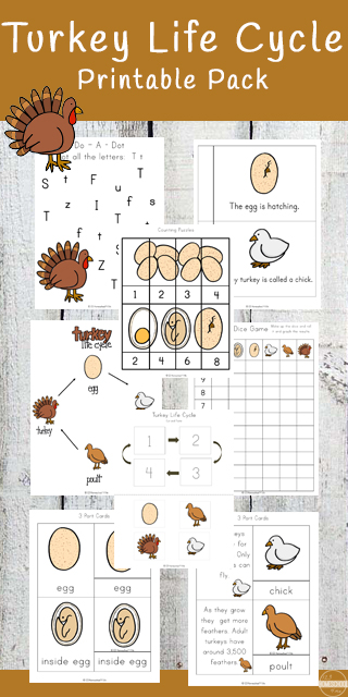 FREE Turkey Life Cycle Worksheets - these free printables are great for not only learn about turkey life cycle, but counting, addition, subtraction, alphabet letters, creative writing, single / plural, noun / verb, and more for Preschool, Kindergarten, first grade and 2nd grade. Makes great Thanksgiving worksheets