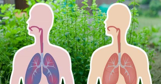 7 Herbs That Kill Viruses and Clear Mucus from Your Lungs