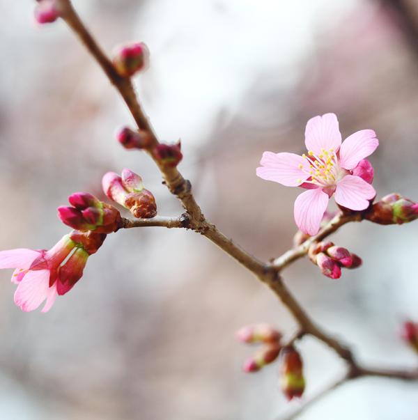 Spring flowers, pink flower