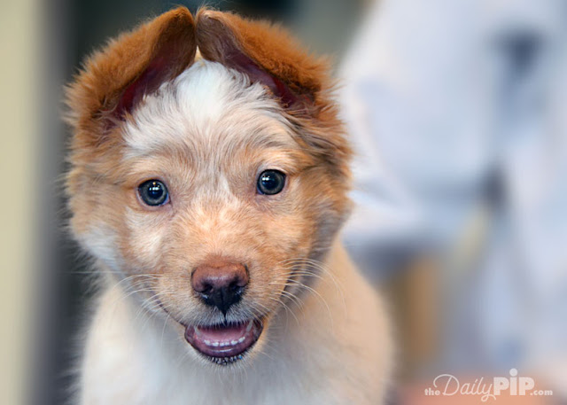 How to rescue and adopt a dog with Spina Bifida