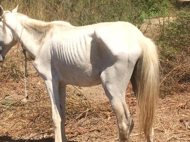 Απίστευτη κακοποίηση πάνω από 25 ιπποειδών στην Πελοπόννησο